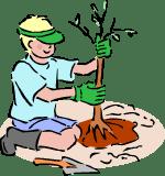 Come piantare alberi da frutto
