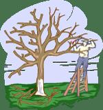 Consigli messa a dimora alberi da frutto
