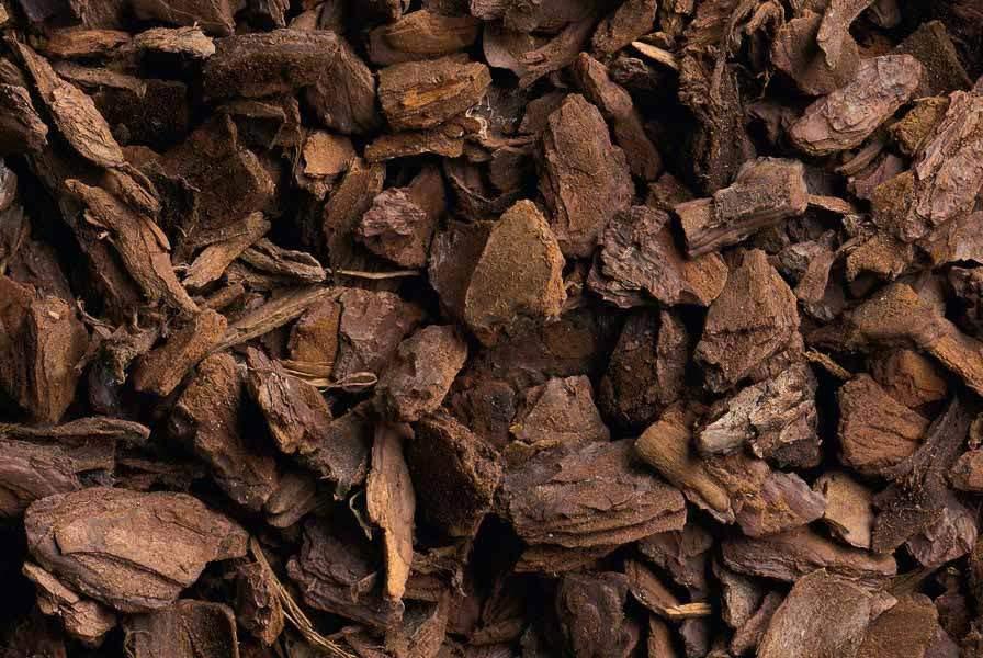 Corteccia di pino - Twenga