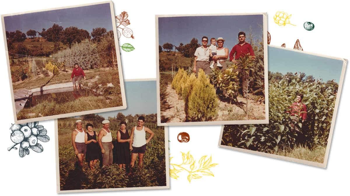 Famiglia Vivaio Gabbianelli