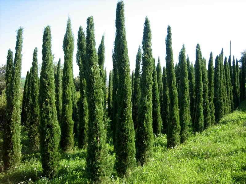 Prezzi piante da giardino on line home visualizza idee for Vendita piante ornamentali