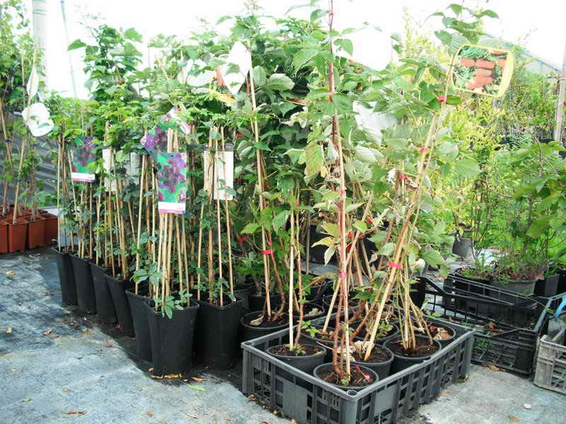 Vendita piante tropicali on line piante tropicali da for Vendita piante esotiche