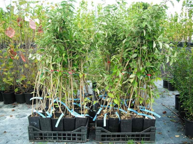 vendita piante tropicali on line piante tropicali da
