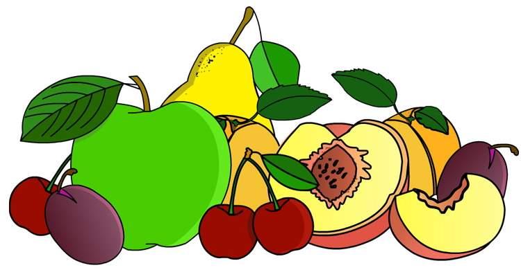Piante da frutto antiche e dimenticate