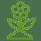 Piante ornamentali da giardino, frutta, olivi, viti