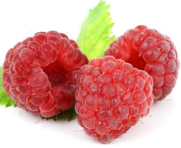 frutti di bosco elenco