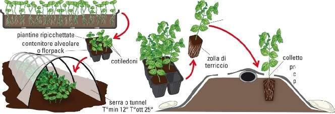 Consigli su come fare un orto a pieno campo