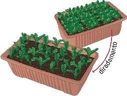 Consigli per la semina di piante da orto in vaso