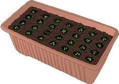 Consigli per la semina di piante di ortaggi in vaso