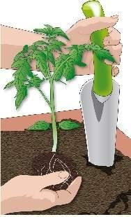 Trapianto piante di ortaggi in vaso