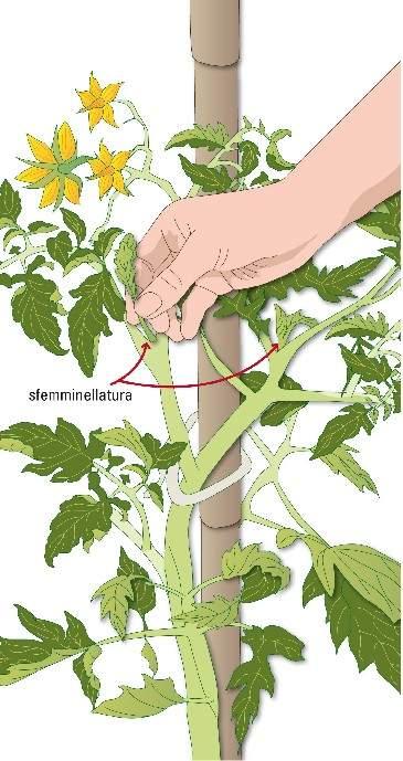 Consigli su come fare un orto su balconi e terrazzi