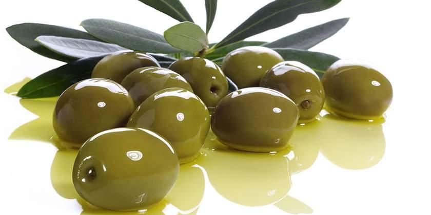 Impianto Oliveto – Guida coltivazione olivo