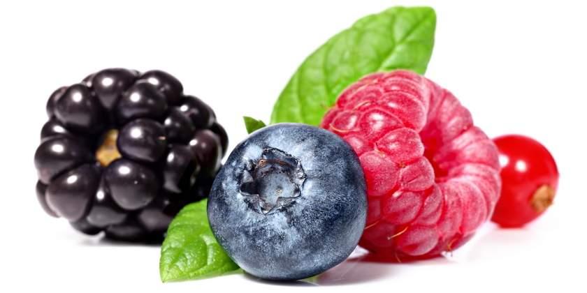 Coltivare Frutti di Bosco – Guida pratica