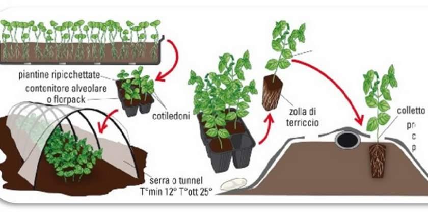 Coltivare orto a pieno campo Guida Pratica